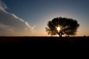Horizont in Donana im Sonnenuntergang