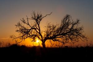 Baum in Donana im Sonnenuntergang