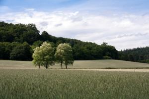 Feld am Laacher See