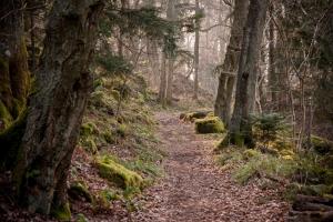 Waldweg in der Sächsischen Schweiz