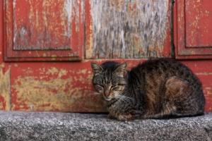 Katze vor Tür